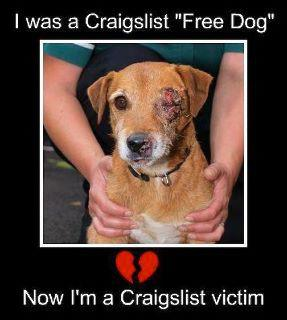 Craigslist and Your Pet | Bailing out Benji