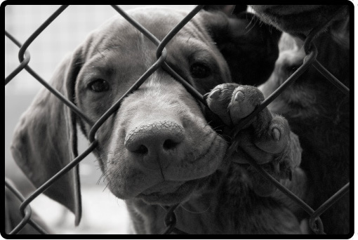 Best Animal Shelter : Help your local rescues shelters bailing out benji