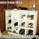 Where have all the crazy cat ladies gone?