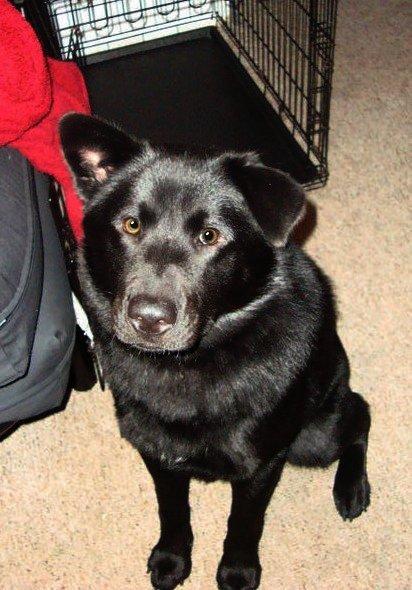 Black Dog Bias No More Bailing Out Benji