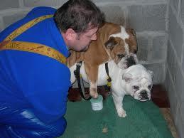 Definition of a bad breeder?