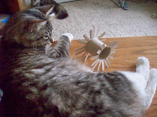 Feeling crafty try these diy crafts for your pet for Diy easy cat toys