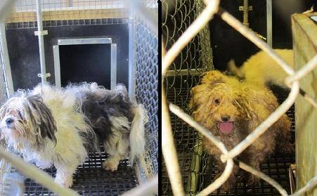 Iowa Puppy Mills Filling Pet Store Cages Across the US