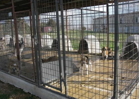 Puppy Mills Selling to Pet stores | Bailing out Benji