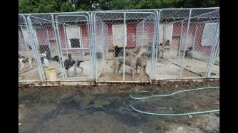 A portion of the kennel